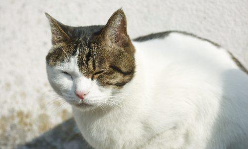 猫背改善のサムネイル